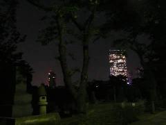 080521aoyamanight_2