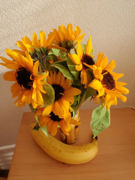 090428sunflower_2