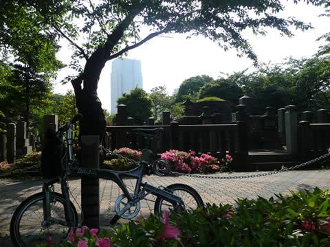 080521aoyamabochi