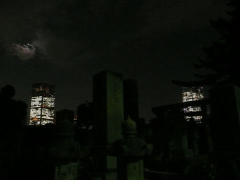081016aoyamabochi