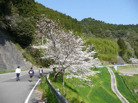 090411tara_sakura