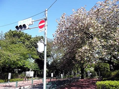 090415aoyama